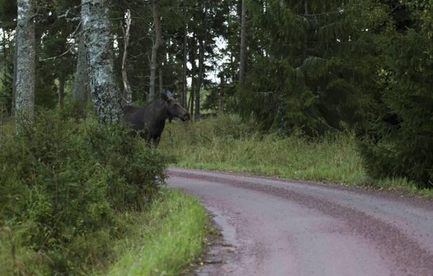 Suomen Vaarallisin Eläin
