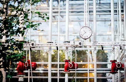Monta metriä korkeina ja pitkinä riveinä kasvavien tomaattien kasvustoista karsitaan alhaalta oksia, leikataan korkeimpia latvoja ja karsitaan lehtiä koko korkeudelta. Kypsät tomaatit poimitaan käsin kolme kertaa viikossa 20 kilon laatikoihin.