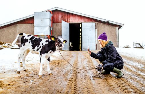 Anna Länsisalmi-Keisala kuvaa vlogeissaan maatilan arkista elämää, jossa vasikat, hiehot ja lehmät ovat keskeisessä roolissa.